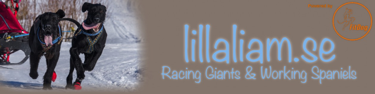 .:: Lillaliam.se – Racing Giants ::.